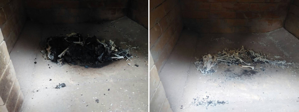 pet incineration equipment