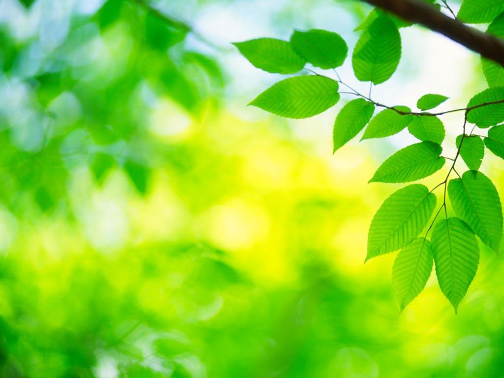 nanjing clover incinerator price